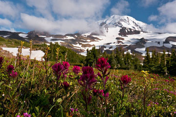 Summer On Mount Rainier